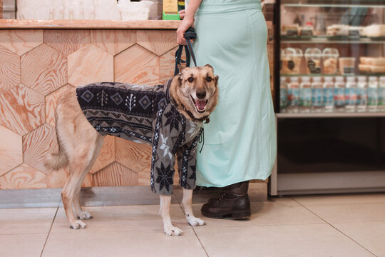 Dog in sweater with its owner in cafe. Dog friendly cafe. Animal care concept.
