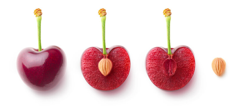 Cherry fruit halves and a pit in a row, flat lay isolated on white background
