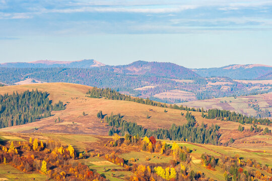 autumnal countryside landscape in evening light. rural fields by the coniferous forest on rolling hills