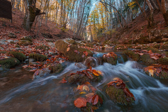 Creek in autumn forest sunset. Fall season in forest