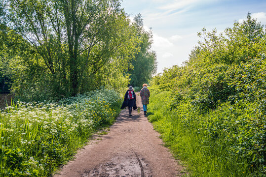 Two women walk on a narrow hiking trail in nature. It is a fresh day in the spring season. Cow parsley on the roadside is in full bloom. The photo was taken in the Markdal near the Dutch city of Breda