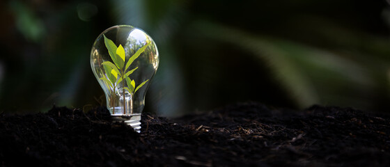 Obraz Saving energy and environment. Tree growth in light bulb for saving Ecology energy nature. Eco and Technology concept, copy space for banner - fototapety do salonu