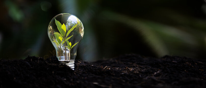 Saving energy and environment. Tree growth in light bulb for saving Ecology energy nature. Eco and Technology concept, copy space for banner