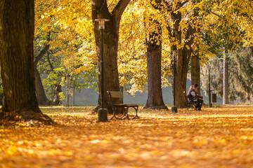 Fototapeta Złota jesień - Park miejski w Zamościu obraz