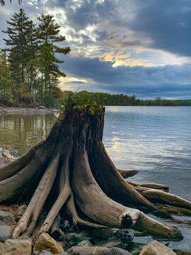 Tree stump on the lake