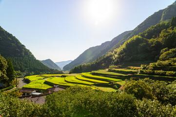 初秋の棚田景色「秋晴れの棚田と彼岸花」 Terraced rice fields in early autumn
