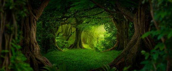 Fototapeta Tropical jungles of Southeast Asia  obraz
