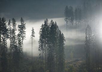Fototapeta Jesienne mgły w lesie - Beskidy obraz