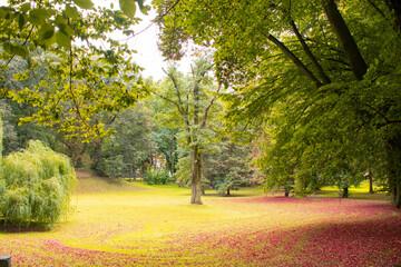 Obraz Krajobraz w parku jesienią - fototapety do salonu