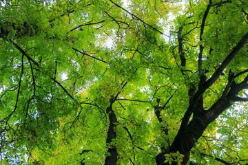 Obraz Jesienne drzewa  - fototapety do salonu