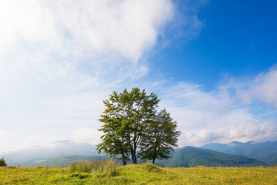 trees on the grassy hill. beautiful early autumn landscape in mountains. sunny morning with fluffy clouds on the blue sky