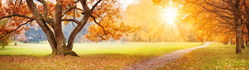 Fototapeta Beautiful oak tree in the autumnal park obraz