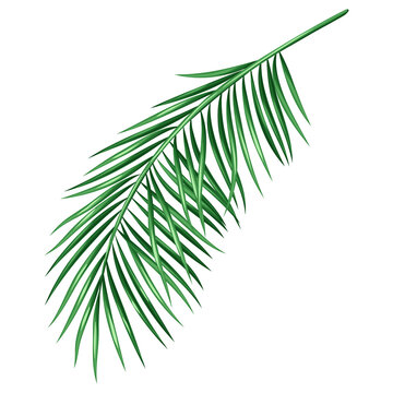 Stylized illustration of palm branch. Image for design or decoration.