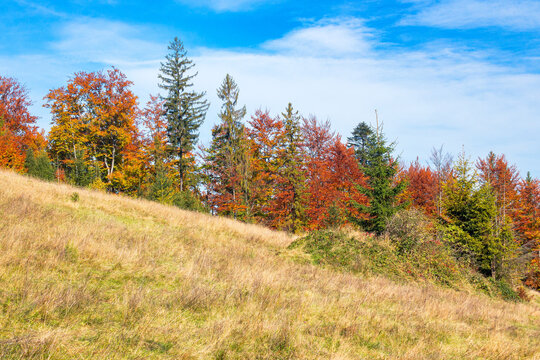 mixed forest on the hill in colorful foliage. wonderful nature environment on a sunny autumn day. clouds on the sky
