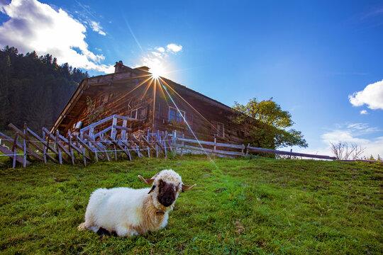 Chalet - Allgäu - Alpe - Immenstadt - urig - Hütte - Schaf