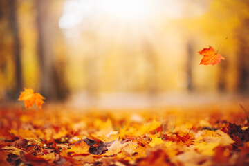 Obraz Defocused view of the colorful leaves in the autumnal park. - fototapety do salonu