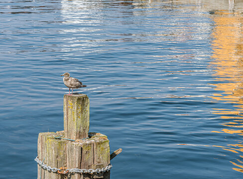 seagull sitting on a pole and the sun reflected in the blue water