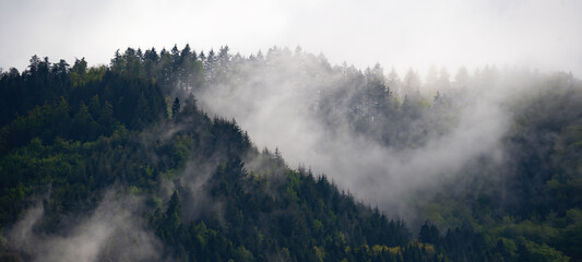 Fototapeta Amazing forest trees landscape in black forest panorama banner long illustration drawing vector obraz