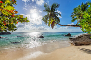 Fototapeta Tropical white sand beach with coco palms and the turquoise sea at sunset on Seychelles island. obraz