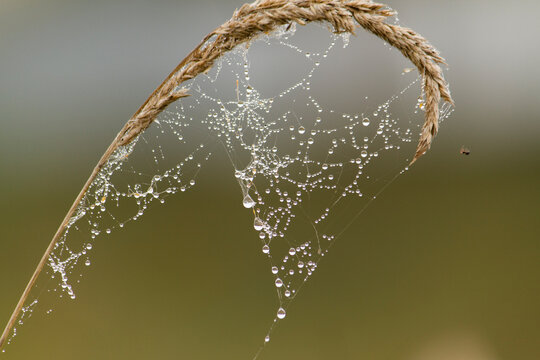 Spider web in morning dew in autumn. Spider web with water drops.