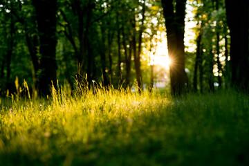 Fototapeta Zachód słońca w parku obraz