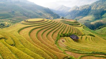 Golden rice season on beautiful terraced fields