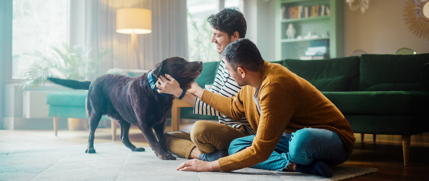 At Stylish Home Apartment: Happy Gay Couple Play with Their Dog, Gorgeous Brown Labrador Retriever. Boyfriends Tease, Pet and Scratch Super Happy Doggy, Have Fun in the Living Room Flat.