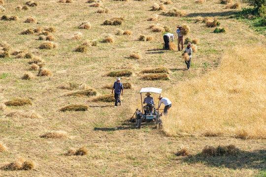 Crop harvest of shepherds preparing for winter in Hakkari mountains