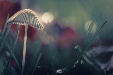 Fototapeta Grzybek w naturze artystyczna wersja bokeh obraz