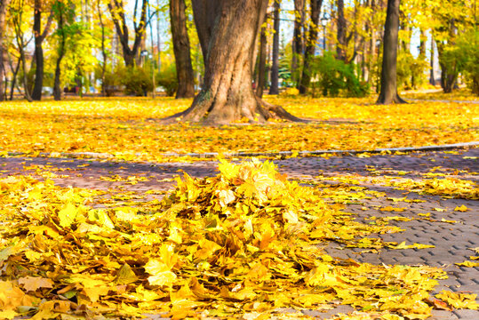 Cleaning in the park - heap of autumn yellow leaves on ground