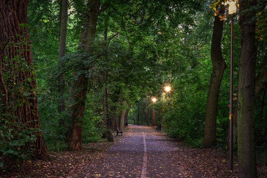ścieżka asfaltowa w parku oświetlonym latarniami