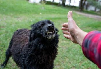 Aggressive dog showing teeth to stranger man