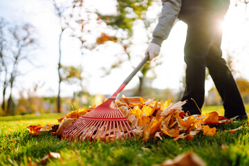 Obraz Rake with fallen leaves in the park. Janitor cleans leaves in autumn. Volunteering, cleaning, and ecology concept. - fototapety do salonu
