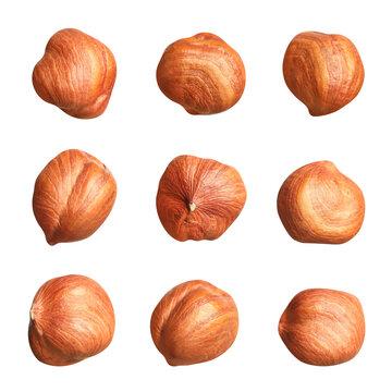 Set with tasty hazelnuts on white background