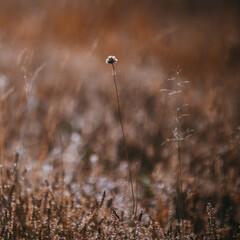 Fototapeta puchate rośliny poruszane przez wiatr rosnące na jesiennym brązowym tle obraz