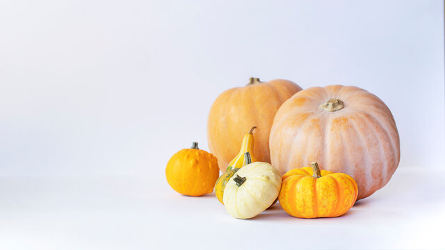 Front view of ornamental pumpkins on white background