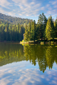lake of synevyr national park at sunrise. gorgeous summer scenery of carpathian mountains reflecting in the water. popular travel destinations of ukraine. stunning environment among coniferous forest