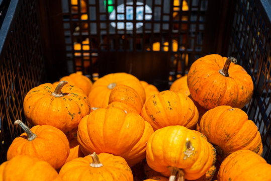pumpkins and gourds in basket
