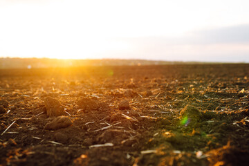 Obraz Plowed field at sunset. Agriculture, soil before sowing. Fertile land texture, rural field landscape. - fototapety do salonu