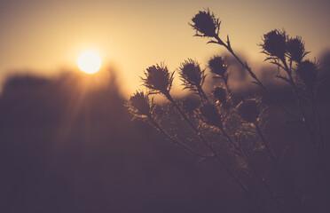 Fototapeta sundown, drzew, niebo, słońce, krajobraz, sylwetka, drzew, charakter, wschody, dzisiejszy wieczór, wieczorny, chmura, dłon, bory, chmura, noc, lato, horyzont, pomarańcz, mgła, mgiełka, poranek, roślin obraz