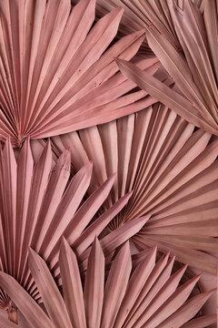 Dried pink tropical palm tree leaf boho style fashionable decoration background