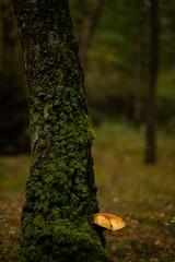 Fototapeta Żółty grzyb obraz