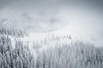 Obraz Splendid winter scene from a bird's eye view. - fototapety do salonu