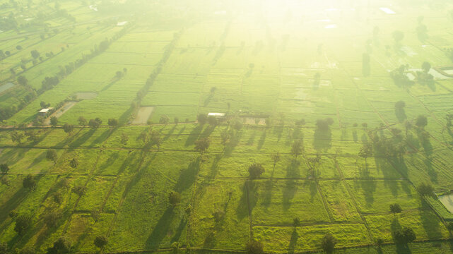 beautiful Aerial view green rice field view of Nakhon Ratchasima, Thailand