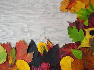 Fototapeta premium Jesienne barwy w liściach i drzewach