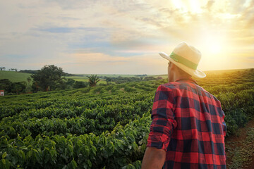 Fototapeta Farmer with hat in front of a coffee plantation crop, in a sunset day on farm. Agricultural worker at field. obraz