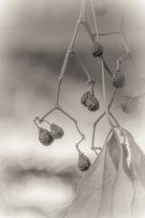 Fototapeta Kwiaty macro fotografia, rośliny ogrodowe w naturalnym środowisku obraz