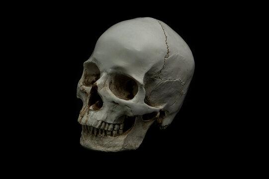 ludzka czaszka jak prawdziwa naturalna