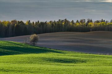 Fototapeta krajobraz na wsi obraz