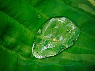 Obraz Kropla wody na liściu - fototapety do salonu